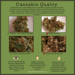 Medical Marijuana Quality Testing