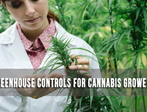 Greenhouse Controls for Today's Cannabis Growers