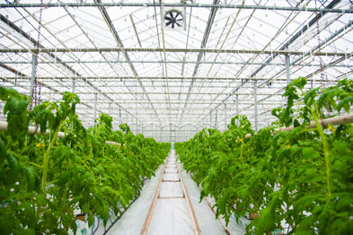 Greenhouse Irrigation Control