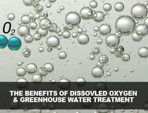 Understanding Greenhouse Water Treatment –  Ozone Vs. UV