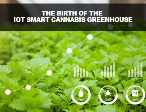 How are licensed Cannabis growers using IoT in Greenhouses today?
