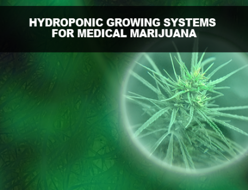 Hydroponic Growing Systems for Medical Marijuana