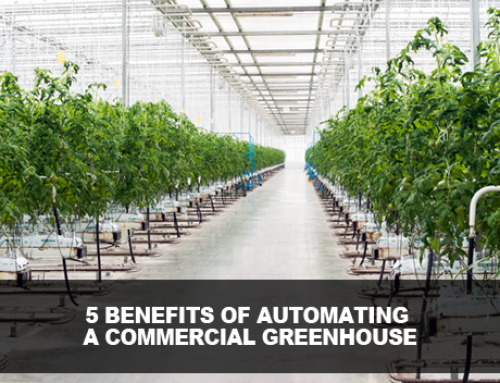 5 Benefits of Automating a Commercial Greenhouse