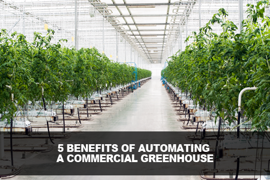 Automating a Commercial Greenhouse