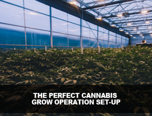 The Perfect Grow Operation Set Up