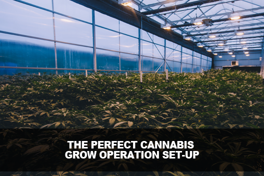 Cannabis Grow Operation