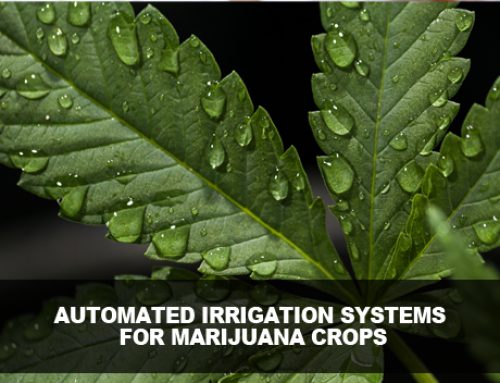 Automated Irrigation Systems for Marijuana Crops
