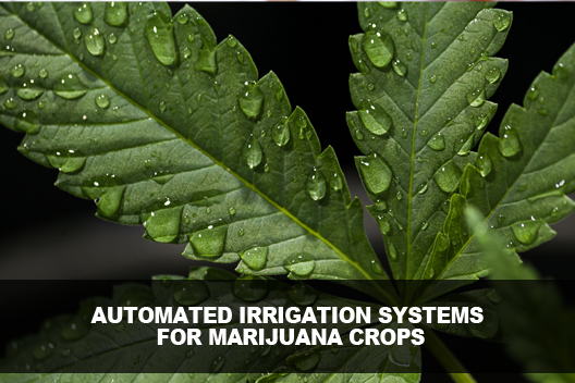 Automated Irrigation Systems