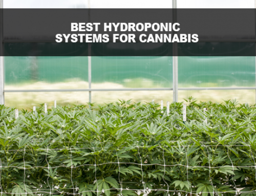 Best Hydroponic Systems for Medical Marijuana