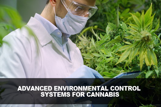 Environmental Control Systems for Cannabis