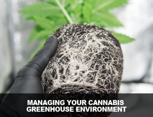 Managing the Cannabis Greenhouse Environment
