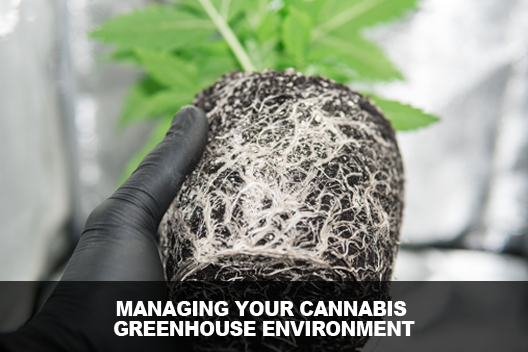 Managing Your Cannabis Greenhouse
