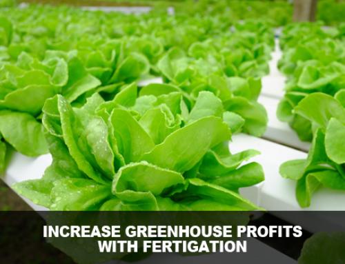 How Fertigation Can Increase Greenhouse Profits