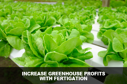 Increase Greenhouse Profits